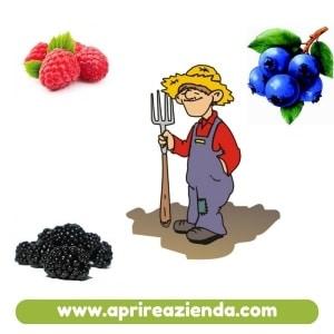 coltivazione di frutti di bosco
