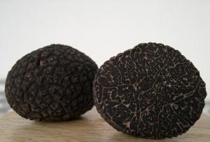 tartuficoltura coltivazione tartufi
