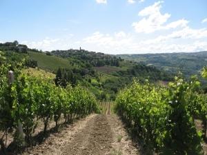 diventare viticoltore
