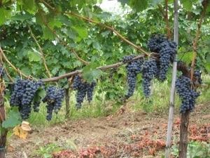 aprire azienda vitivinicola